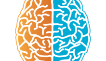 diagram of brain with the left side colored orange and the right side colored blue
