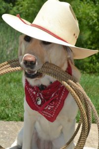Photo of Arianne aka Ari in a cowboy hat on top of her head and red bandanna around her neck. In her mouth, she is holding thick rope that is looped multiple times in a circle.
