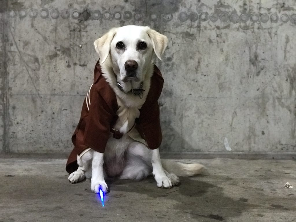 'Ari' in a Jedi costume with brown hooded robe, a beige tunic, brown belt with small satchel attached, and under right paw is a mini blue lighted light saber. Ari is part Labrador and part golden retriever with almost white blond fur. She is sitting.
