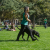 picture of a woman walking with a black service animal on a college campus